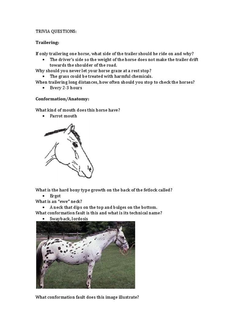 Luxury Horse Fetlock Anatomy Picture Collection - Human Anatomy ...