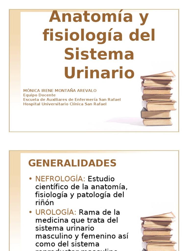Anatomía y fisiología sistema urinario