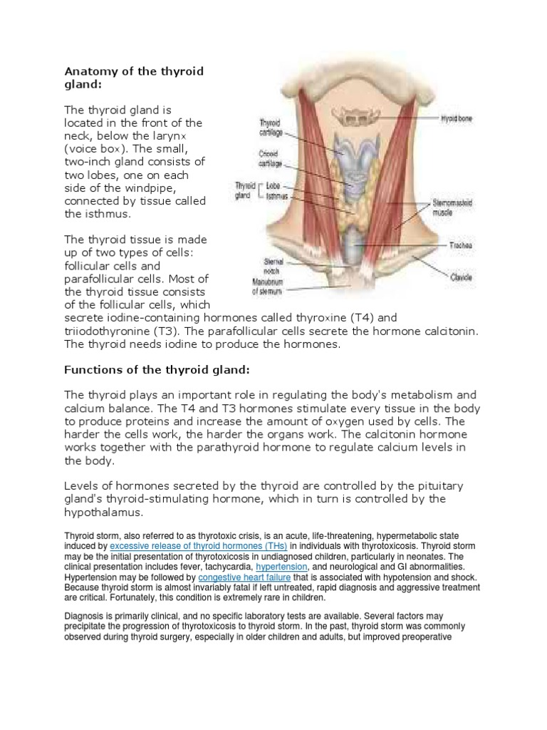 Anatomy Of The Thyroid Gland For You And For Me Thyroid