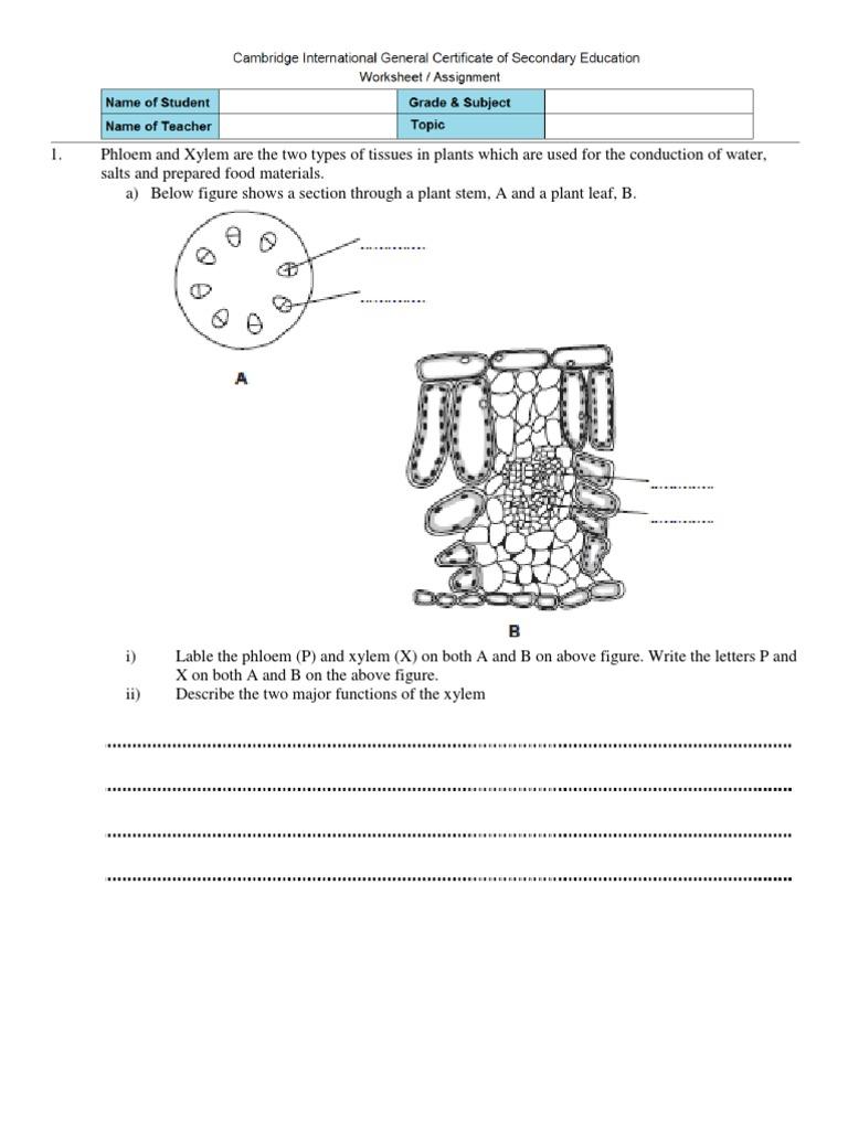 Xylem and phloem worksheet worksheets for school toribeedesign worksheet transport in plants tissue biology plants robcynllc Images