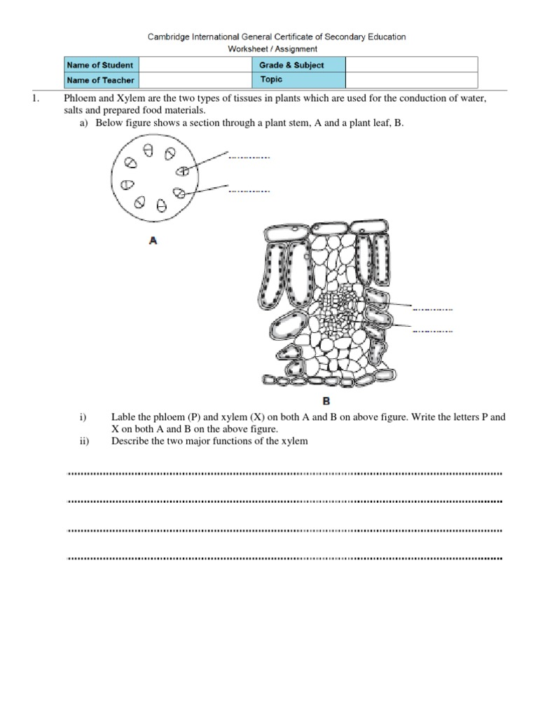 Worksheet Transport in Plants Tissue Biology – Xylem and Phloem Worksheet