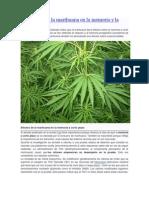 Los Efectos de La Marihuana en La Memoria y La Personalidad