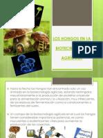 Los Hongos en La Biotecnologia Agricola (2)