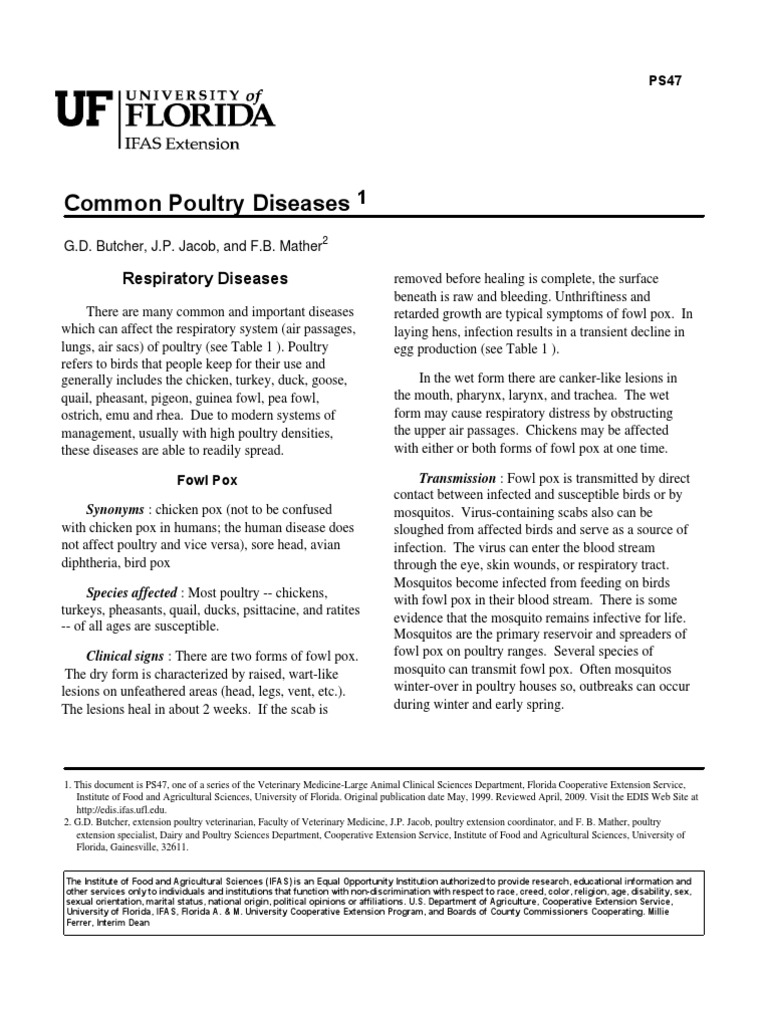Common Poultry Diseases   Avian Influenza   Infection