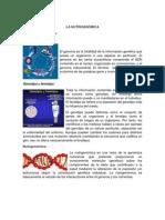 La Nutrigenómica