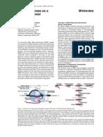 Rna Polymerase Molecular Motor