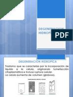 136960562-DEGENERACION-HIDROPICA