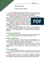 Botanica - Arboricultura - Fichas de Arboles - Encina (Quercus Ilex)