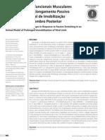 Alterações Morfofuncionais Musculares em Resposta ao Alongamento Passivo em Modelo Animal de Imobilização Prolongada de Membro Posterior