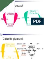 91Ciclurile Glucozei Alte Glucide (1)