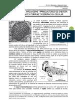 mitocondrias y respiracion celular.pdf