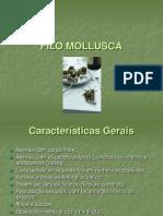 06 Filo Mollusca