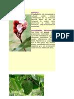 Plantas de La Selva