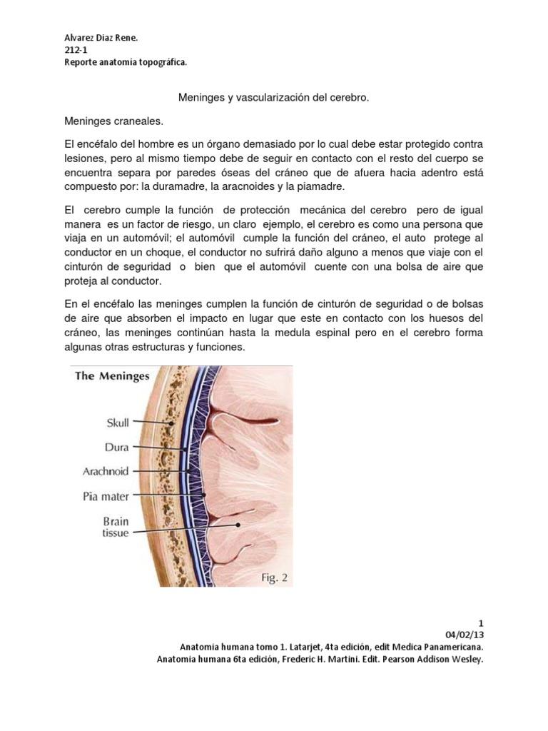 Reporte Anatomia 2 meninguesy vascularizacion