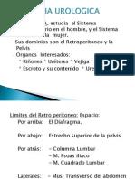 Anatomia Del Tracto Urinario II b