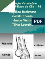 Anatomia Veterinária