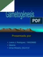 Presentacion de Gametogenesis