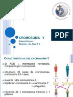 Cromosoma y