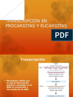 TRANSCRIPCIÓN EN PROCARIOTAS Y EUCARIOTAS