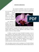 orquideas amenazadas evdencia 8