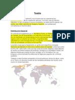 Informe Tundra 2012