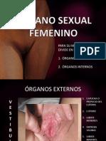 ÓRGANO SEXUAL FEMENINO Y MASCULINO