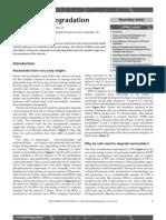 Nucleotide Degradation.pdf