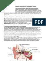 Apuntes receptores sensoriales