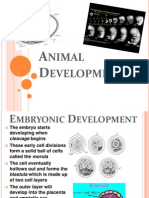 Animal Development