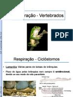 CardioRespiratório_parte 2