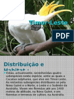 Danilo Timor-Leste