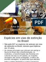 Sonia Espécies em vias de extinção no Brasil POINT
