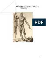 Anatomie Suport