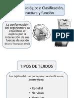 Fibras de Charpey, Fibroblastos, Etc.