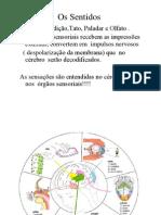 Aula5_örgãos sensoriais_Audição_1seg.ppt _Modo de Compatibilidade_