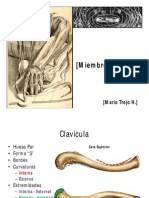 Huesos Superior