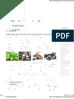 กระชายดำ (Kaempferia Pafiflora)พืชสมุนไพร ยาดองเหล้า บ้านเข็กน้อย เขาค้อ เพชรบูรณ์