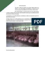 informe porcicultura