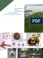 2b Adaptaciones Plantas Ambiente Salobre
