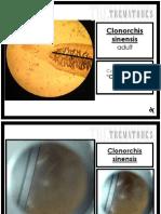 Parasitology (Laboratory) - Trematodes