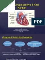 cardiovascular sys