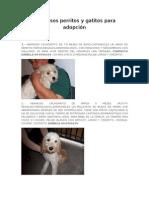 47 perritos y gatitos en adopción, Santiago de Chile (5 junio 09)