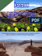 Desierto en Flor