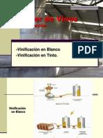 Saber Del Vino Vinificacion Blanco y Tinto