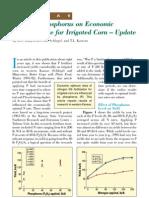 2000. Effect of Phosphorus on Economic Nitrogen Rate for Irrigated Corn - Update (Kansas)
