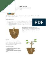 La Planta Ferdy