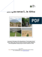 Jatropha Curcas Africa