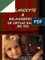 MELANOCYTE MELANIN