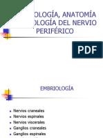 EMBRIOLOGÍA, ANATOMÍA Y FISIOLOGÍA DEL NERVIO PERIFÉRICO[1]