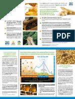 Produccion Sustentable de Miel y Soya Transgenicos